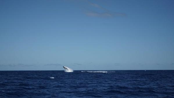 <center>Entre ciel et mer :<br> Lucas Tousart, Valérie Gauvin et Fabrice Abriel<br> à la découverte des joyaux de La Réunion
