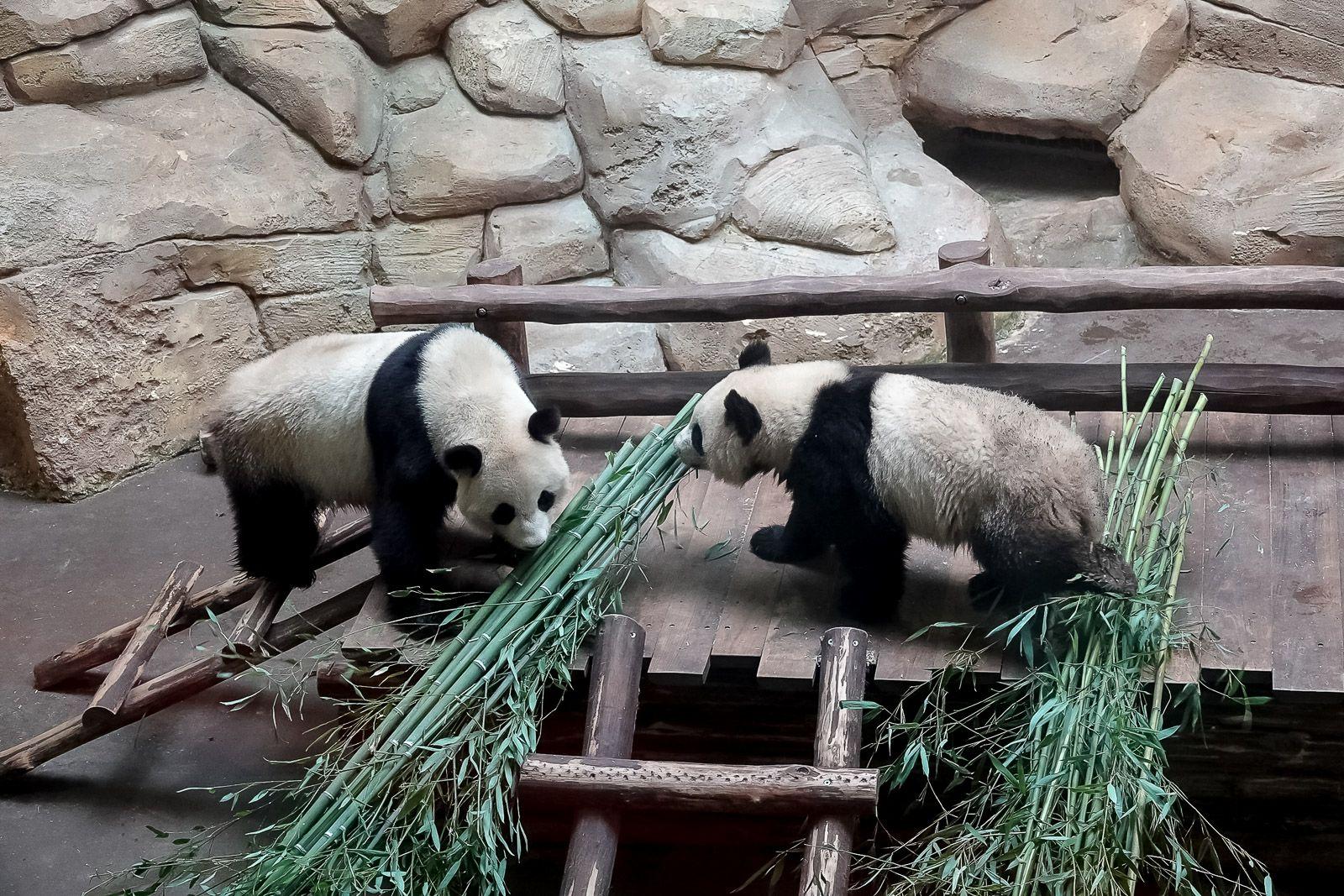 """<center>""""S'envoler vers le Rêve ...""""  <br> Jour 11 : Les marmailles de 1000 Sourires passent un journée de Rêve <br> en compagnie des animaux du Zoo de Beauval"""